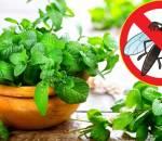 diệt côn trùng, cách diệt muỗi, cách đơn giản giúp diệt côn trùng trong nhà, cua so tinh yeu