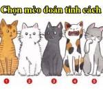 trắc nghiệm tính cách, chọn chú mèo yêu thích đoán tính cách, bật mí tính cách, tính cách bản thân, cua so tinh yeu