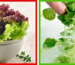 Mẹo hay nhà bếp, thực phẩm, rửa thực phẩm, an toàn thực phẩm, vệ sinh, cua so tinh yeu