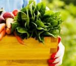bảo quản rau củ, bảo quản ngày hè, cách bảo quản rau củ giữ được lâu, cua so tinh yeu
