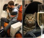chuyện hy hữu, đưa mèo lên máy bay, hàng không, cua so tinh yeu