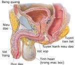 kiến thức sức khỏe, kiến thức sống khỏe, bí quyết sống khỏe, kiến thức nam khoa, tình dục nam, tinh trùng, tinh hoàn, viêm bàng quang
