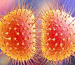 bệnh lậu, dấu hiệu bị bệnh lậu, bệnh lây truyền qua đường tình dục, cách điều trị bệnh lậu, cách phòng bệnh lậu