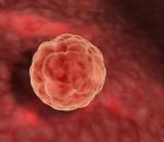 trứng, quá trình rụng trứng, thụ thai, mang thai, yêu tối ảnh hưởng
