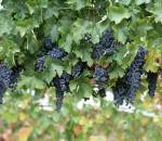 Tăng cường sức để kháng, rau củ, thực phẩm tốt, mùa thu đông, bí quyết sống khỏe