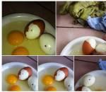 trứng gà, tiêm máu, virus HIV, nhiễm HIV, quả trứng