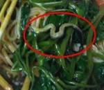 chuyện lạ thế giới, sợi mì rắn, cua so tinh yeu