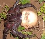 sinh vật kỳ dị, đầu búp bê làm vỏ, cua so tinh yeu