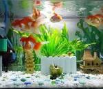 làm sạch bể cá, mẹo vặt, lau dọn bể cá, mẹo vặt gia đình, bể cá, cua so tinh yeu