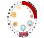 biện pháp tránh thai, xuất tinh, quan hệ, chu kỳ kinh, cuasotinhyeu