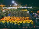 Nhà vườn, Buôn hoa tết, Mua hoa ngày 30 tết, Tết Mậu Tuất 2018, Người bán hoa tết kể chuyện bị ép giá ngày 20 tết, Hoa tết, cua so tinh yeu