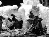 bệnh cúm, dịch cúm, phòng chống cúm, cúm gia cầm, Sức khỏe, cua so tinh yeu