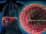 Viêm gan do virut và nguy cơ với bạn tình, cua so tinh yeu