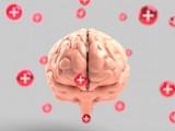 chức năng não, hoạt động của não người, thói quen có hại cho não bộ, cua so tinh yeu