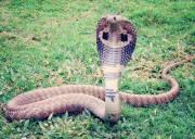 rắn độc cắn, cai nghiện ma túy, chất kích thích, cua so tinh yeu