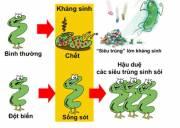 Vi khuẩn có lợi, vi khuẩn gây hại, vi khuẩn gây bệnh, vi khuẩn lây lan, kháng khuẩn, kháng sinh, vi khuẩn hp, vi khuẩn E.coli, vi khuẩn tốt