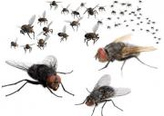 đuổi ruồi , khéo tay , mẹo vặt, gia đình