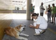 Chó  ,   Pet   ,  Vật nuôi  ,   Trung thành  ,   Cảm động