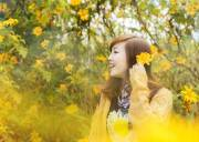 hoa dã quỳ, ba vì, kí ức tuổi thơ, chất thơ, lãng mạn