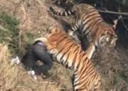 chuyện lạ, trèo vào vườn thú, hổ vồ chết, trốn vé