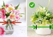 hoa lâu tàn, mẹo vặt, cua so tinh yeu