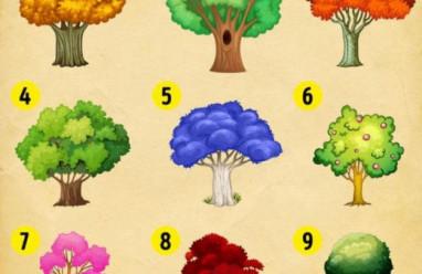 Trắc nghiệm vui: Dự đoán năm 2021 của bạn qua cách chọn cây