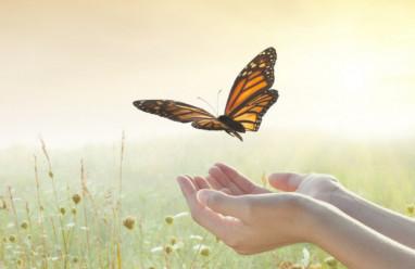Học cách buông bỏ để có được một cuộc đời hạnh phúc, bình yên