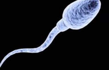 đứt gãy ADN, phân mảnh ADN, xét nghiệm halosperm, tinh trùng