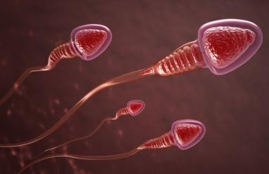 xuất tinh, xét nghiệm tinh dịch đồ, thời gian hóa lỏng, tinh trùng, mật đột tinh trùng, trị số bình thường