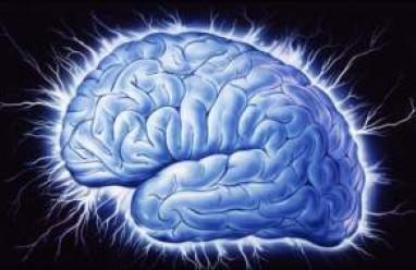 não, mũi, miệng, tai, lưỡi, vị giác, sự phát triển của não
