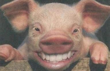 truyện cười, funny, hài hước, truyện vui, cười, chém gió, yêu lợn