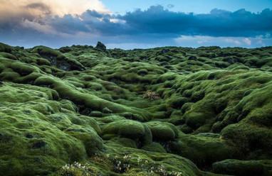 cánh đồng xanh, thiên nhiên, chuyện lạ đó đây, cua so tinh yeu