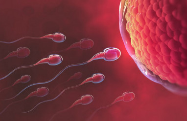 kích thước trứng, thụ thai, quan hệ, con trai, tinh trùng, trứng rụng