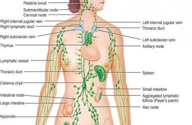 sức khỏe, hạch bẹn, nổi hạch, nổi mụn, vùng kín, cơ quan sinh dục