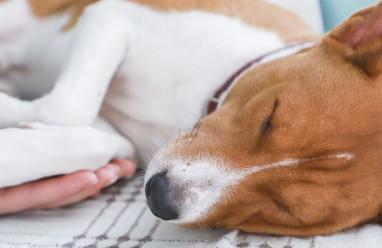 Chó con bị chết sau khi cắn người có nên đi tiêm phòng ngừa lại???