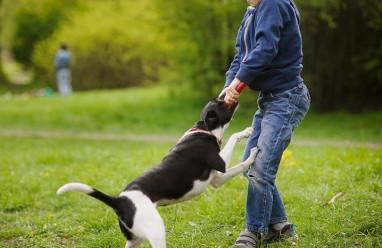 Trẻ nhỏ bị chó cắn xước chân có nên đi tiêm phòng???