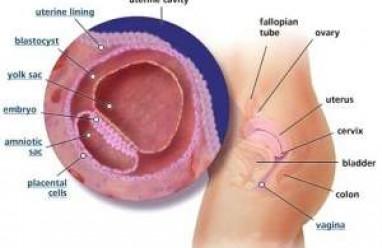 thai tuần thứ 4, thai nhi 4 tuần tuổi, bắt đầu, chu kỳ mang thai, thụ thai, túi nước ối, cơ quan, bộ phận, thai nhi, thai kỳ