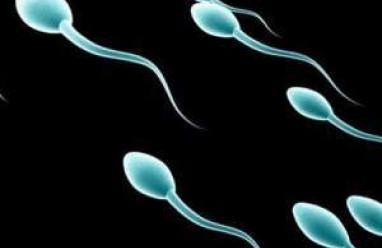 Tinh trùng, tế bào, sinh sản nam, sinh ra, xuất tinh, giai đoạn, hình thành, cua so tinh yeu