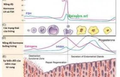 kiến thức sức khỏe, kiến thức phụ khoa, kinh nguyệt, biện pháp tránh thai, âm đạo, tử cung, buồng trứng