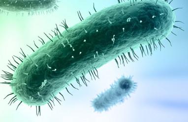 Vi khuẩn Mycoplasma, viêm đường sinh dục, tiết niệu, điều trị Vi khuẩn Mycoplasma.