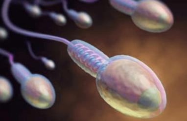 Vô sinh do hình dạng tinh trùng bình thường thấp