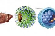 loại virus viêm gan, điều cần biết, cua so tinh yeu