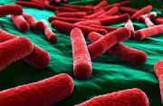 vi khuẩn, kháng sinh, kháng kháng sinh, kháng thuốc, bệnh truyền nhiễm, ung thư, cua so tinh yeu