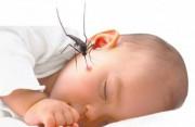 sốt xuất huyết, trẻ em, chăm sóc trẻ bị sốt xuất huyết, Paracetamol