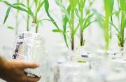 chỉnh sửa gen, nông sản, hành lang pháp lý, ngành nông nghiệp Việt Nam