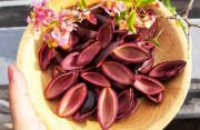 quả trám, thực phẩm từ núi rừng, món ngon, các món ăn từ quả trám