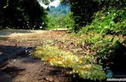 Kinh nghiệm du lịch Ninh Bình tự túc 2020 - tìm về cố đô Hoa Lư