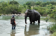 Con voi cuối cùng ở Bắc Tây Nguyên đã chết