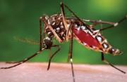Quốc gia nào chỉ có duy nhất một con muỗi?