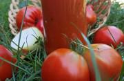 """Học làm sốt cà chua trong mùa """"giải cứu"""" nông sản"""